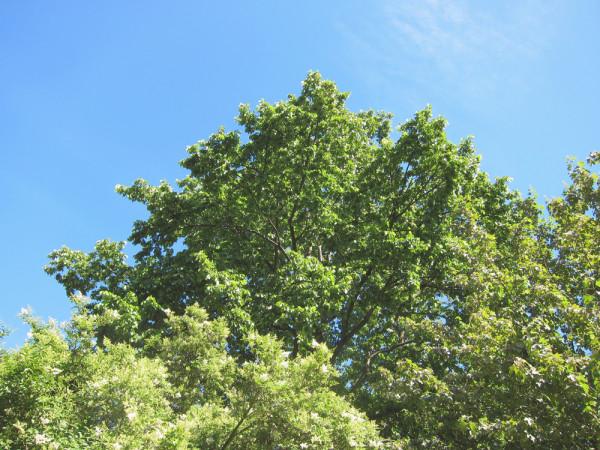 10bigtree